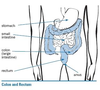 colon and rectum diagram
